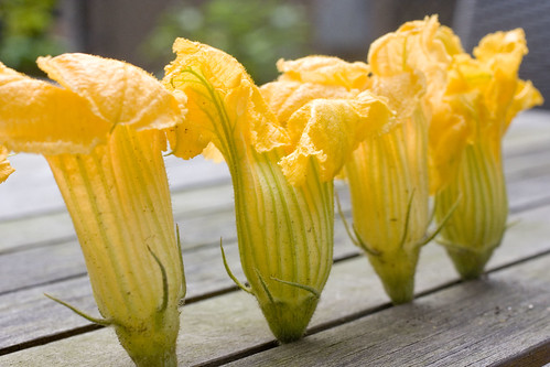 row of squash blossoms 2