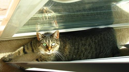 Zellie Sunbathing