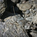 Invisible stone cricket