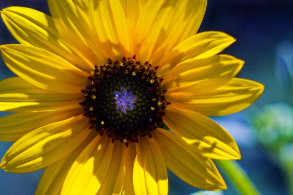 IMAGE: http://farm3.static.flickr.com/2465/3876116451_fb15eb3436_b.jpg