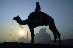 Morning at the Taj (Dave Schreier) Tags: morning india beautiful sunrise taj mahal agra camel hinduism
