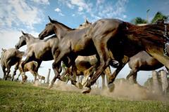 _DSC3872 (Roberta Cadore) Tags: pordosol brazil horse brasil cowboys landscape nikon paisagem aligator cavalo matogrosso pantanal tuiuiu jacar lao capela nikond3