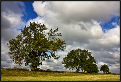 Autumn Trees (Pat Dalton...) Tags: blue autumn trees sky field grass clouds photoshop canon geotagged raw sigma hedge 1770mm 450d contrastmaster pdeee454 geo:lat=52533434 geo:lon=1123041
