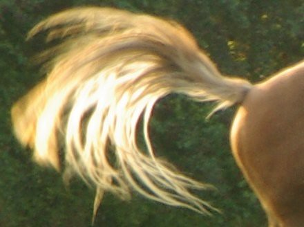 tail of light