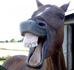 Horse Laugh (Bill Gracey) Tags: horse animal caballo funny different political humor rick christine explore odd laugh haha amusing wry droll explored horselaugh animalhumor abigfave platinumheartaward rieze riezedecaballo