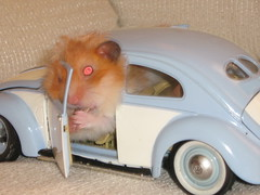 Hamster & VW (mahdzar) Tags: hamsters