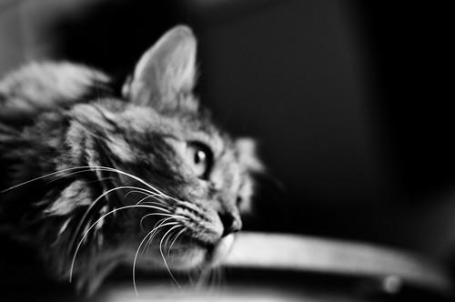 Whiskers:  September 15, 2009