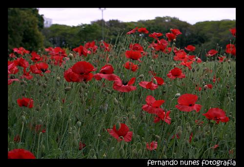 Campos Floridos