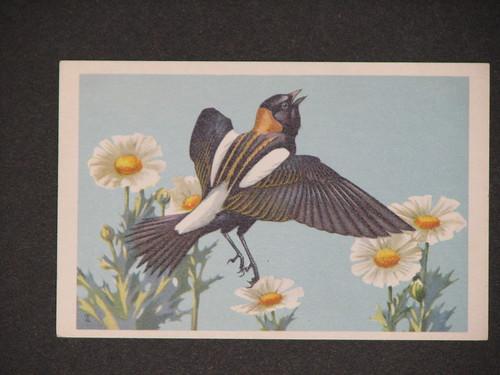 bird 004