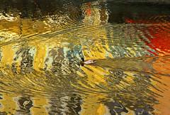 Praga (vanto5) Tags: trip travel water birds prague praha uccelli czechrepublic repblicacheca moldava repubblicaceca eskrepublika
