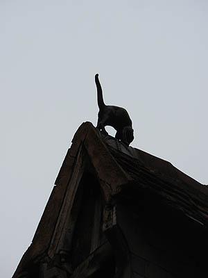 chat sur le toit.jpg