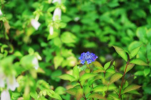 2011.06.26(IMGP0978_77mm_Glamour Glow