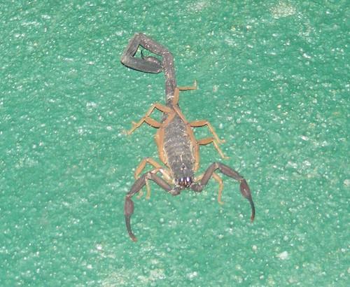 Tricksy Scorpion - DSCF4622c