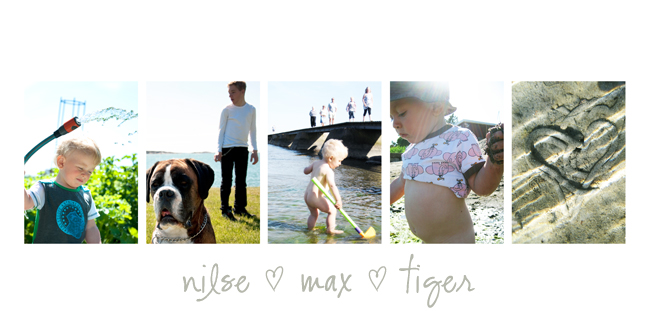 nilse max tiger