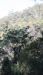 Hollybank treetops tour (4) (mzsweetdivine (Sharon/shazza)) Tags: flyingfox hollybanktreetopstour
