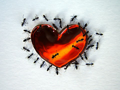 Sweetheart (Dragan*) Tags: macro love insect photo amazing candy heart group ants getty the dragantodorovic platinumheartaward