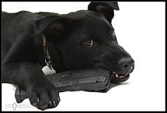 Puppy with Magpul PMAG (stickgunner) Tags: puppy stickman ar15 magpul