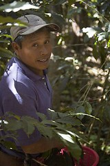Miguel picking coffee