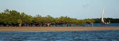 Mangrove Island (charles lovely) Tags: africa travel tourism kilimanjaro nature kenya african wildlife nairobi indianocean tourist safari westafrica lions elephants lamu swahili amboseli gamedrive kenyan charleslovely chucklovely