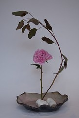 Pauline's Ikebana 8 July 2009 (l1nda1) Tags: flower ikebana floralart sogetsu japaneseflowerarrangement