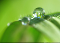 Our Planet has to be greener (Syed Xain) Tags: pakistan macro green nature water drop sharp refraction planet droplet islamabad reverselens ppa greass xain canons5is nikkor18mm