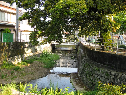 River and camphor tree