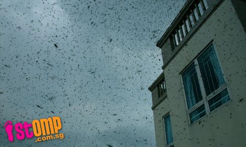 Bee invasion in Tampines Avenue 1
