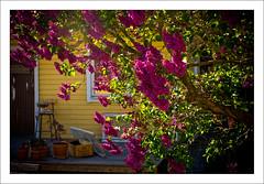 Mellan hägg och syrén (Anders Mohlin) Tags: sverige gnesta srmland lillasigtuna
