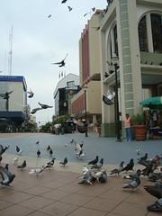 Palomas (Obiwan82) Tags: parque ecuador central el palomas oro machala