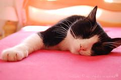 Pretty Girl (Kitty & Kal-El) Tags: pink cat kitty rosa rosachoque