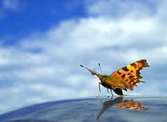Ready for Take Off (D.Reichardt) Tags: sky nature clouds butterfly takeoff europegermany stubben abigfave flickraward