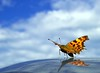 """Ready for Take Off (D.Reichardt) Tags: sky nature clouds butterfly takeoff europegermany stubben abigfave """"flickraward"""""""