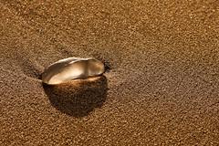 jellyfish sunreflections (Baltic Light Photography) Tags: light holiday france beach night canon de photography jellyfish shot tripod lac baltic leon le without 2009 laurent availble gmt colvert 24105l goletz 40d aquitanien creattivit merliniski