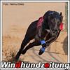 Greyhound Greve Moltke, NL
