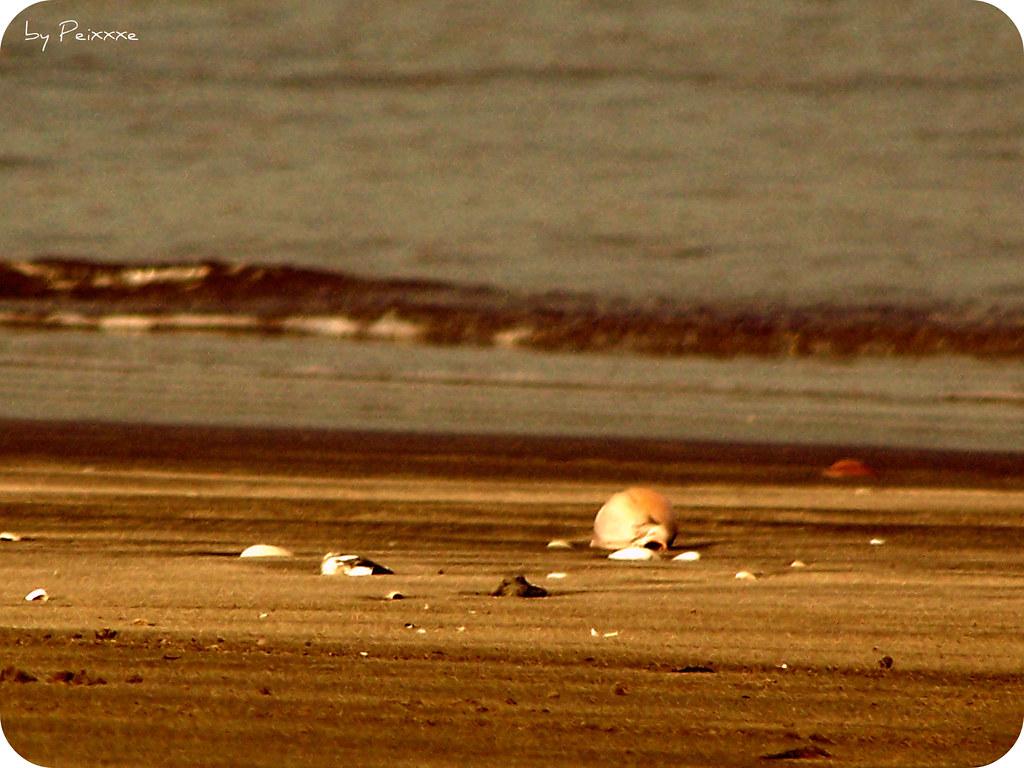 184/365 - Praia Deserta