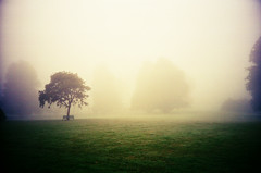 Morning Fog in Kilkenny (Cormac Phelan) Tags: morning kilkenny ireland mist tree film field fog 35mm lomo lca xpro lomography lka crossprocessing vignette phelan cormac ctprecisa