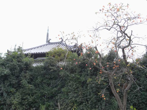 法起寺三重塔とコスモス-13