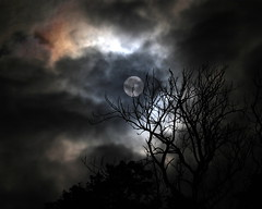 Fright Night (Anima Fotografie) Tags: ireland moon tree silhouette night october branch twig lina 2009 nite steiner62 eos7d canoneos7d