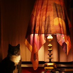 lamp-shade guardian (Frizztext) Tags: lamp cat square candid interior guard galleries guardian 500x500 frizztext infinestyle takemetothekittens