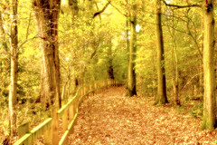 Autumn pathway-Lymm Dam (pj.pictures) Tags: autumn trees fall leaves forest woodland woods mystical orton ortoneffect