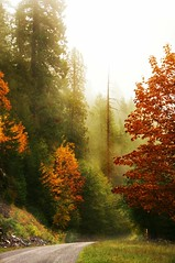 Autumn Road (Darrell Wyatt) Tags: autumn white cold wet river washington salmon columbiarivergorge favoriteplaces