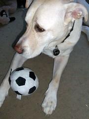 Zeus_soccerball_102509
