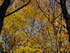Fall (BlakeClinkard) Tags: christmas city family flowers blue autumn sunset red blackandwhite food orange sun mountain toronto ontario canada elephant black streets flower color cute bird art fall film beach cup church nature beauty car fashion animals rose festival architecture night clouds forest butterfly river garden zoo lights monkey pig waterfall europe candles day purple time quebec snake montreal olympus tennis sunflower zebra mapleleaf hippo redsky rogers wilderness montroyal minden nadal flutterby candlelit evolt e420 olympuse420 minersbaylodge