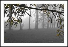 automne (@lain G) Tags: automne olympus iledefrance brouillard seinemarne