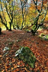 The magic stone (cuellar) Tags: arbol autumn bosque color colour fall forest hayedo leaf red rojo trees otoño otoo