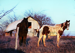 IMG_1816fixresized (purplemustang) Tags: sunset horse preteen