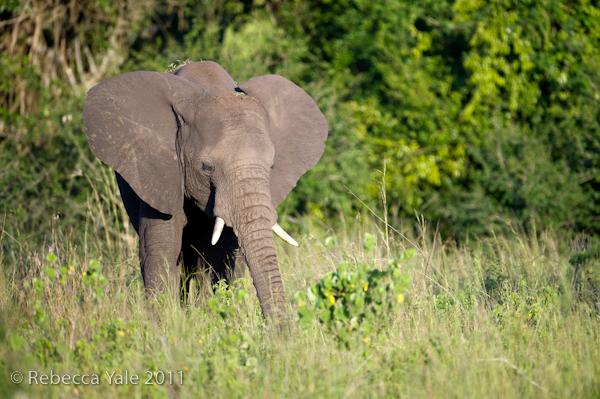 RYALE_Rwanda_Uganda_Safari-277