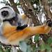 Madagascar_Andasibe_PKryl_9