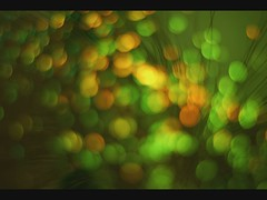 TimeLapse of Bokeh (McGun) Tags: timelapse video bokeh picasa