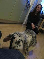 IMG_4723 (grindove) Tags: edvin kanin djur